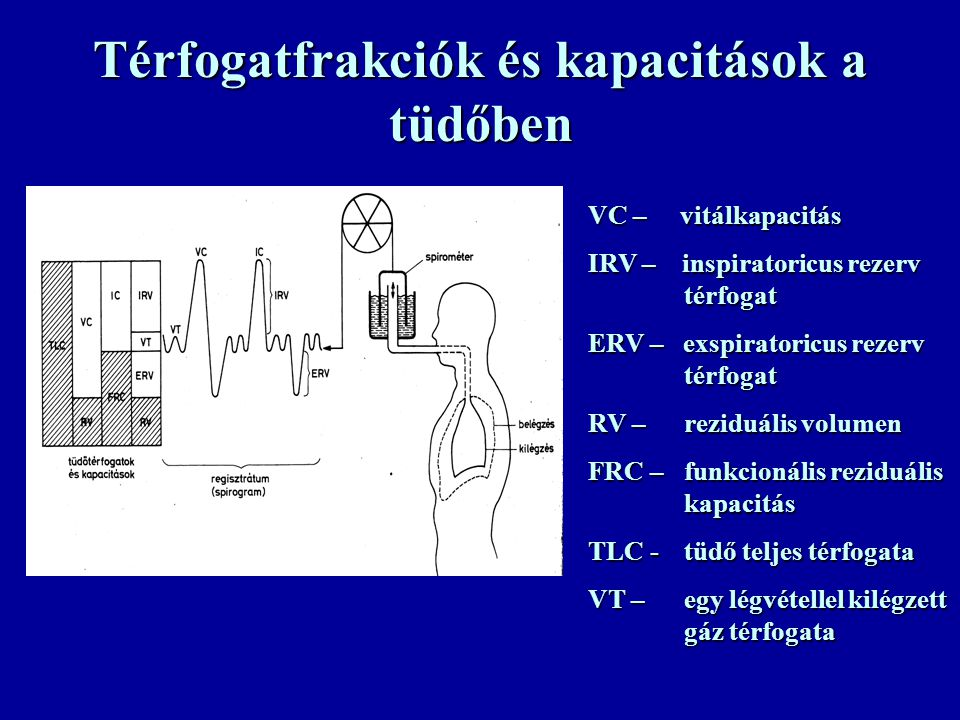 Térfogatfrakciók és kapacitások a tüdőben