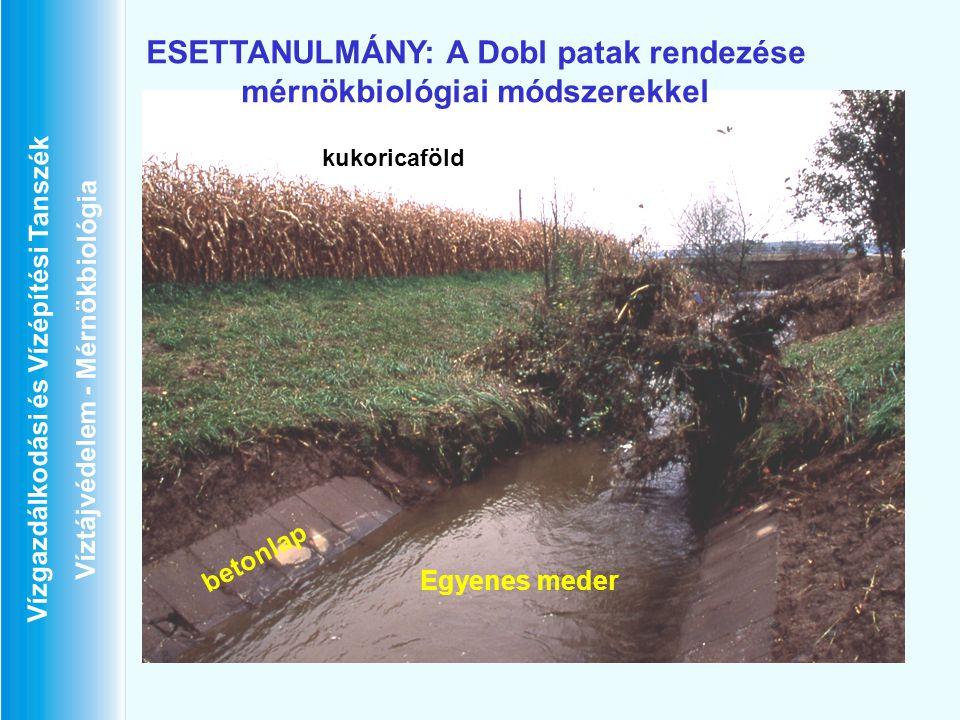 ESETTANULMÁNY: A Dobl patak rendezése mérnökbiológiai módszerekkel
