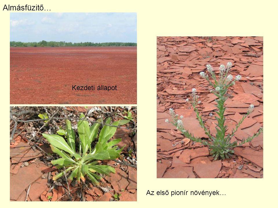 Almásfüzitő… Kezdeti állapot Az első pionír növények…