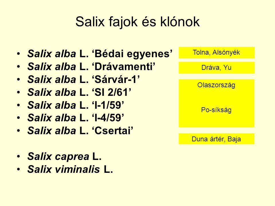 Salix fajok és klónok Salix alba L. 'Bédai egyenes'