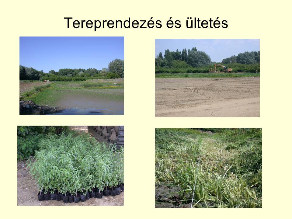 Tereprendezés és ültetés