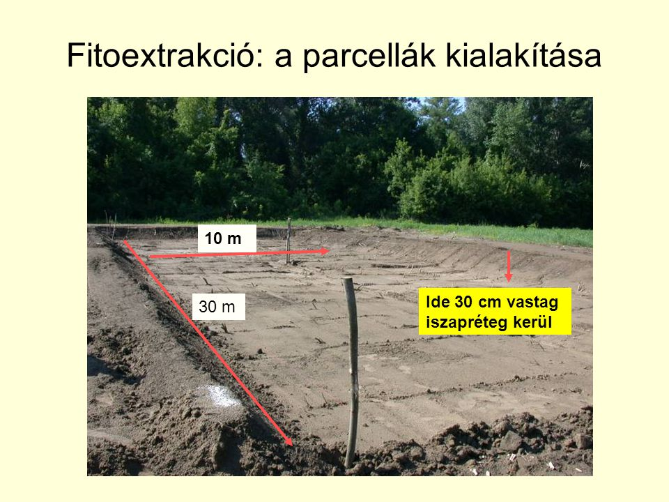 Fitoextrakció: a parcellák kialakítása