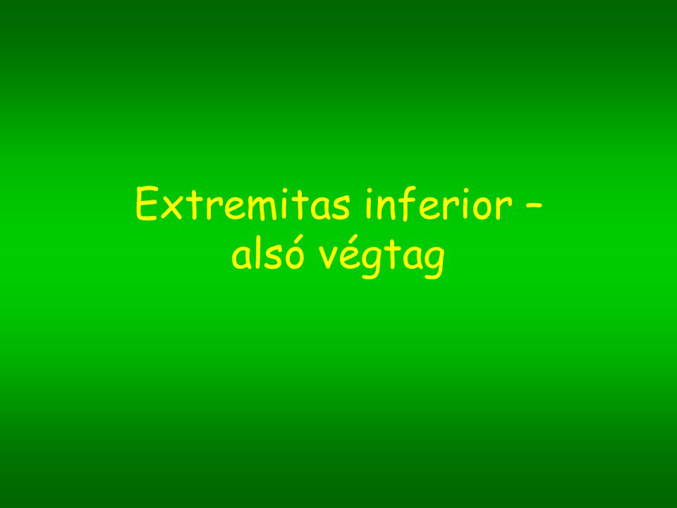 Extremitas inferior – alsó végtag