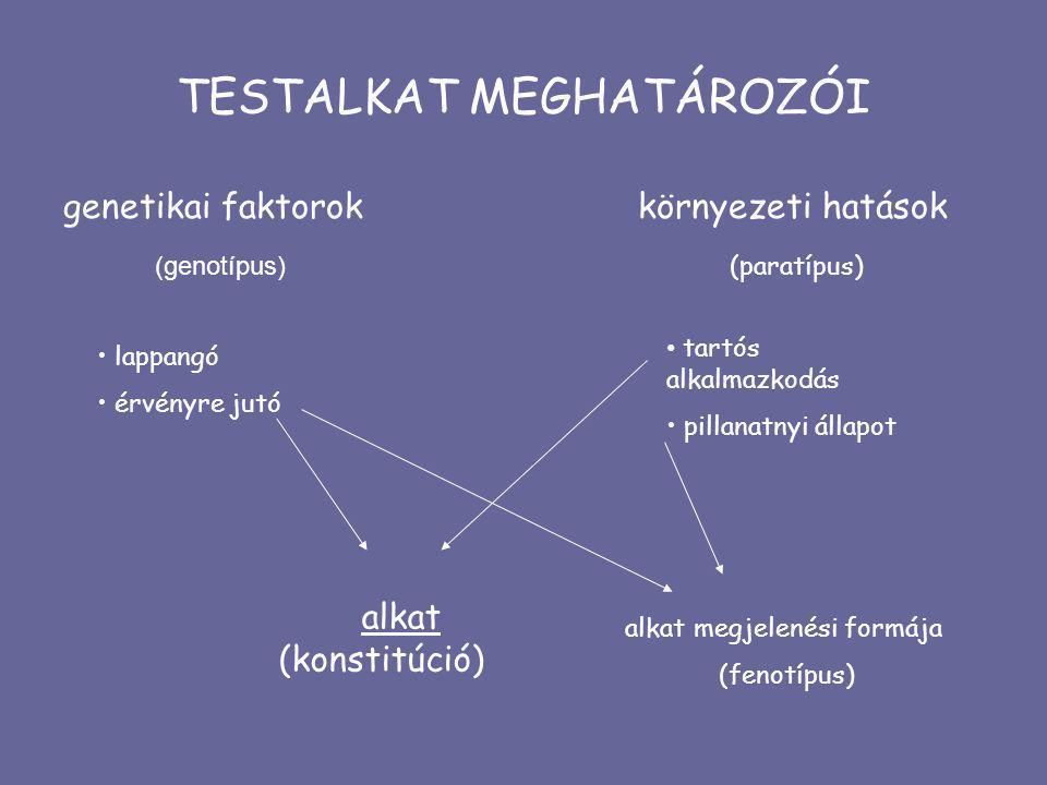 TESTALKAT MEGHATÁROZÓI