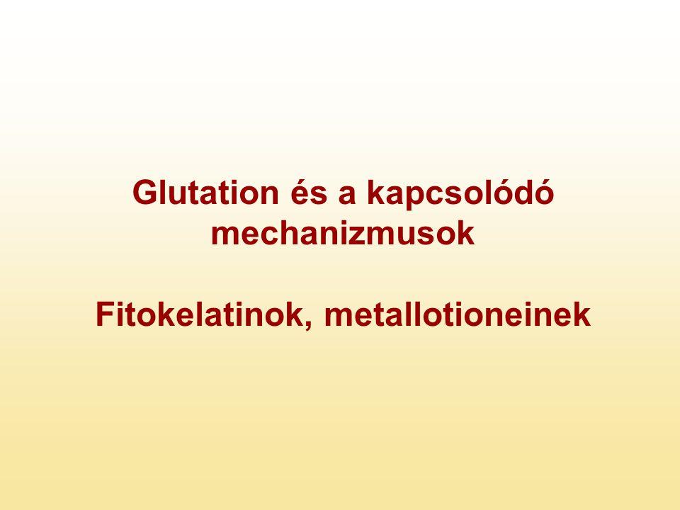 Glutation és a kapcsolódó mechanizmusok Fitokelatinok, metallotioneinek