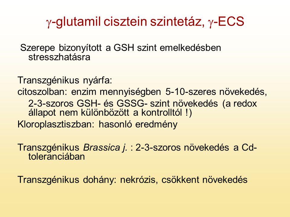 g-glutamil cisztein szintetáz, g-ECS