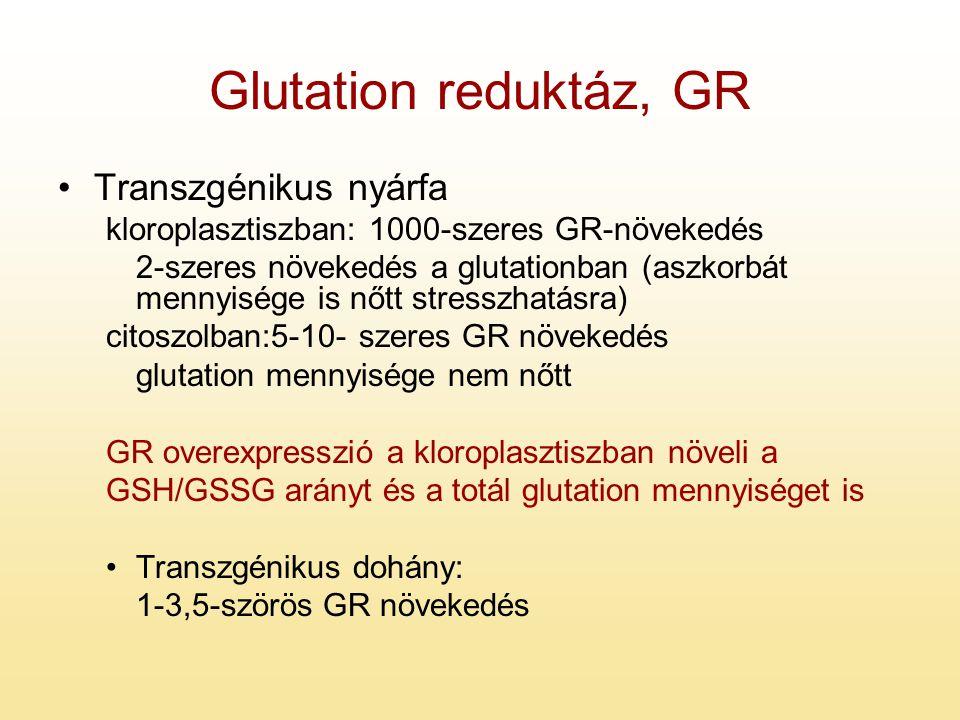 Glutation reduktáz, GR Transzgénikus nyárfa