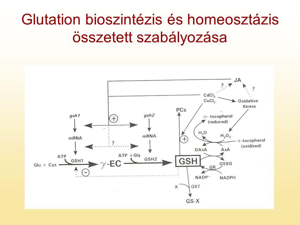 Glutation bioszintézis és homeosztázis összetett szabályozása