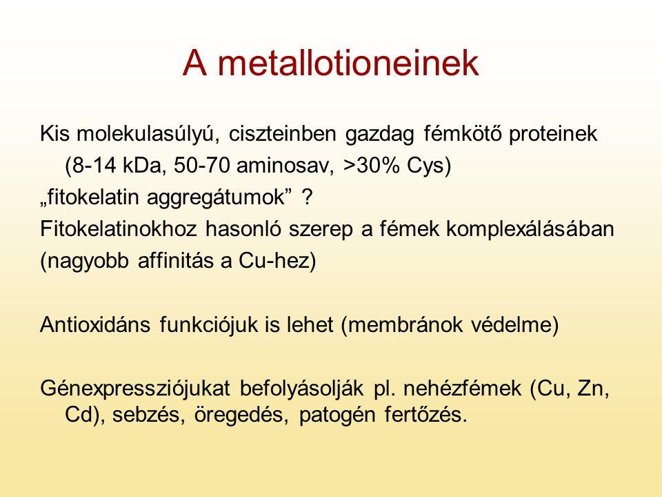 A metallotioneinek Kis molekulasúlyú, ciszteinben gazdag fémkötő proteinek. (8-14 kDa, 50-70 aminosav, >30% Cys)
