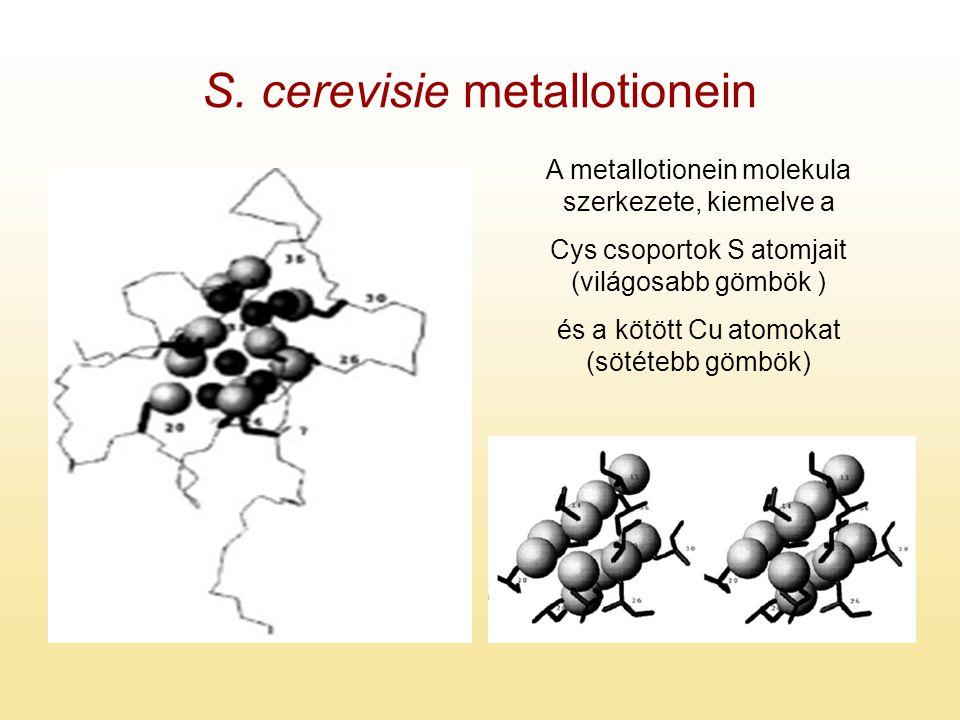 S. cerevisie metallotionein