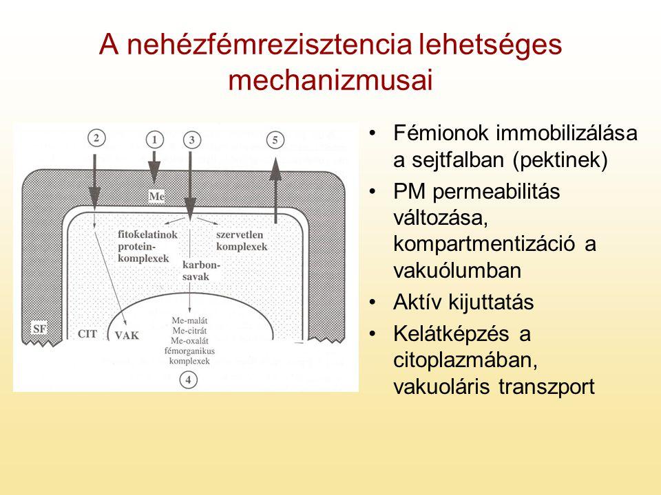 A nehézfémrezisztencia lehetséges mechanizmusai