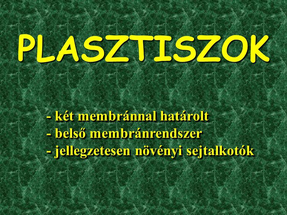 PLASZTISZOK - két membránnal határolt - belső membránrendszer
