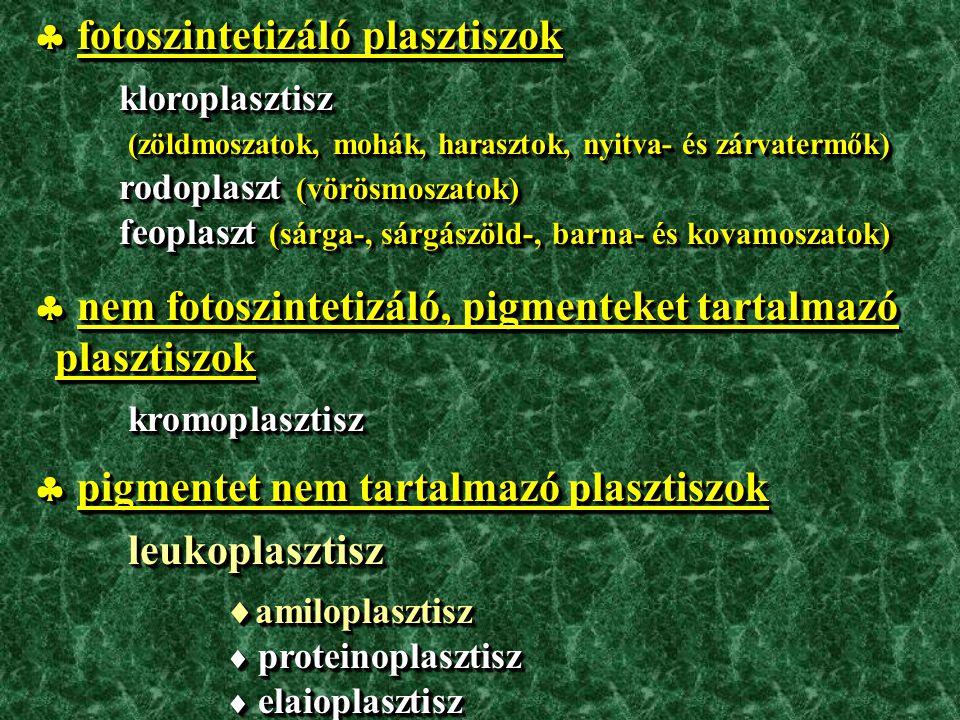  fotoszintetizáló plasztiszok