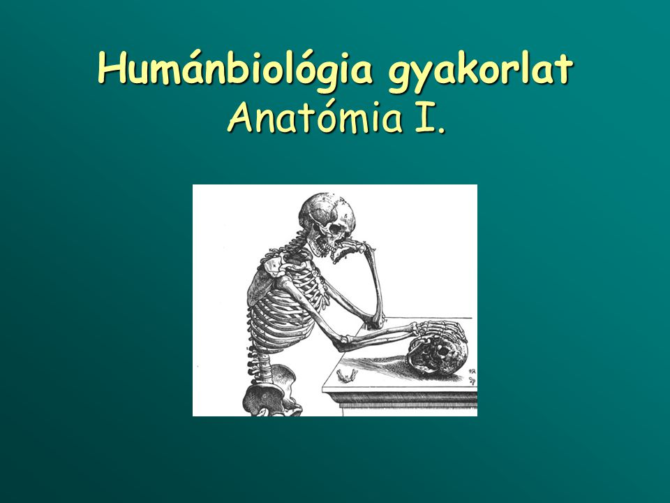 Humánbiológia gyakorlat Anatómia I.