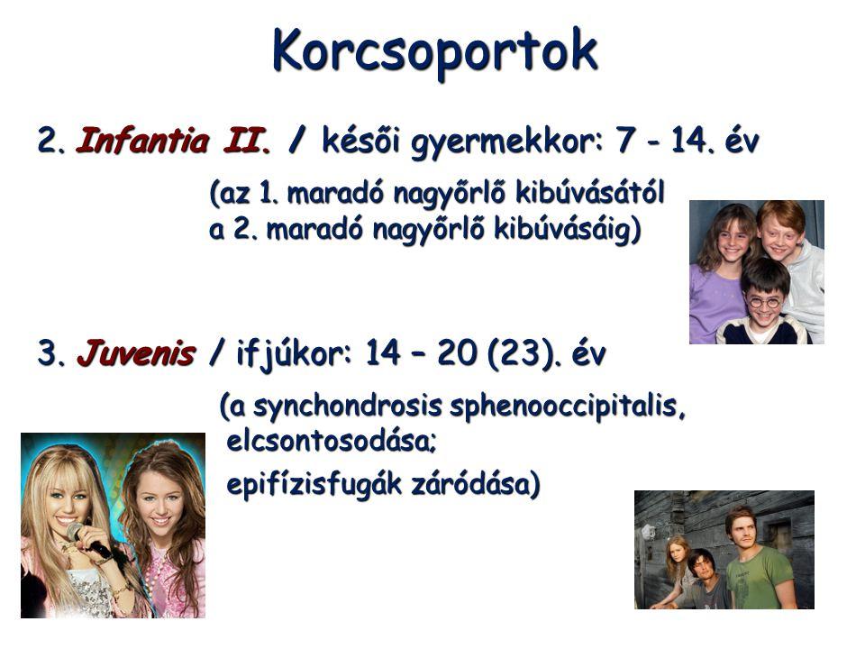 Korcsoportok 2. Infantia II. / késői gyermekkor: 7 - 14. év