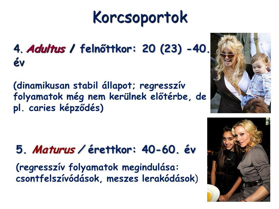 Korcsoportok 4. Adultus / felnőttkor: 20 (23) -40. év