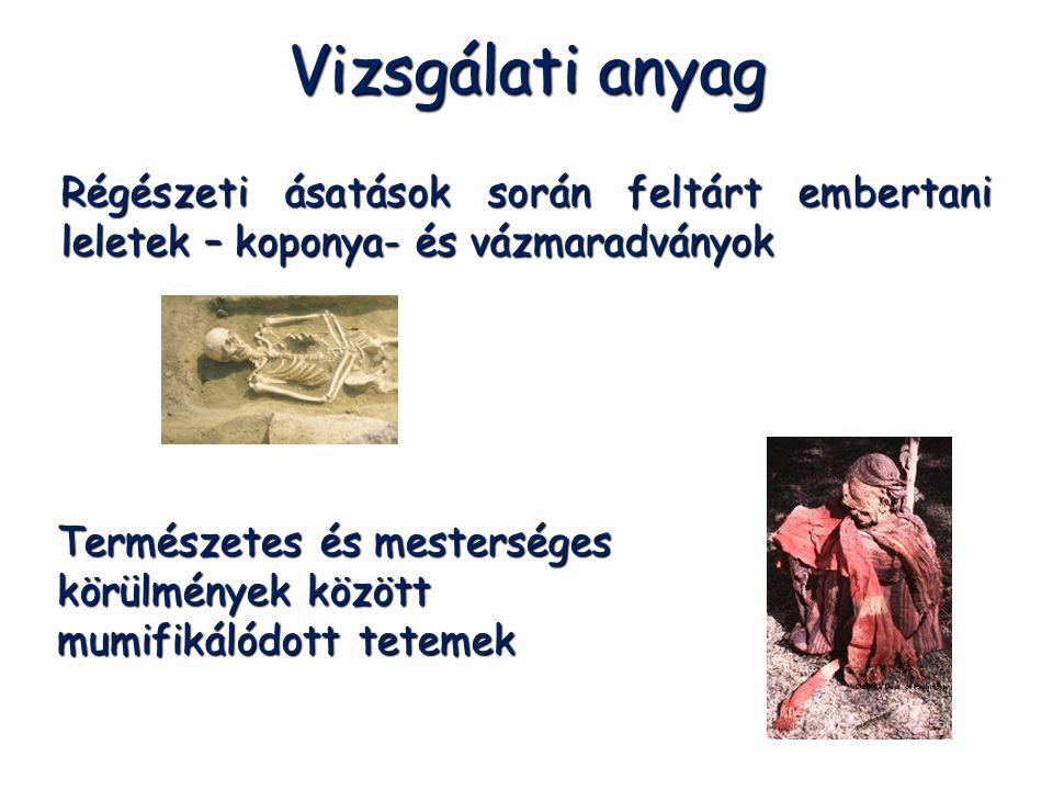 Vizsgálati anyag Régészeti ásatások során feltárt embertani leletek – koponya- és vázmaradványok.