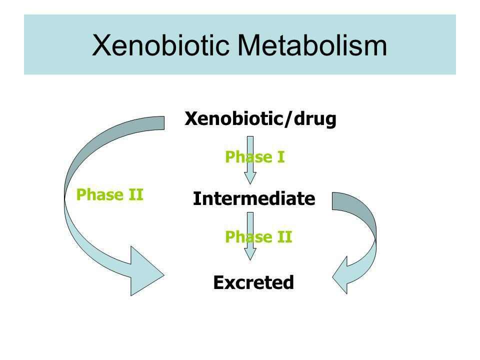 Xenobiotic Metabolism