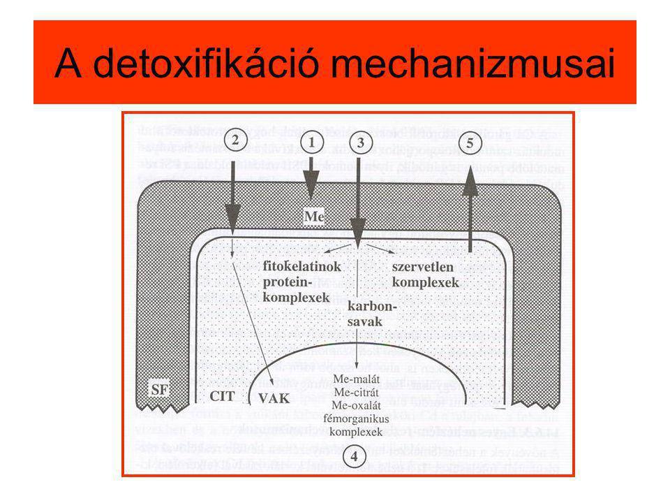 A detoxifikáció mechanizmusai