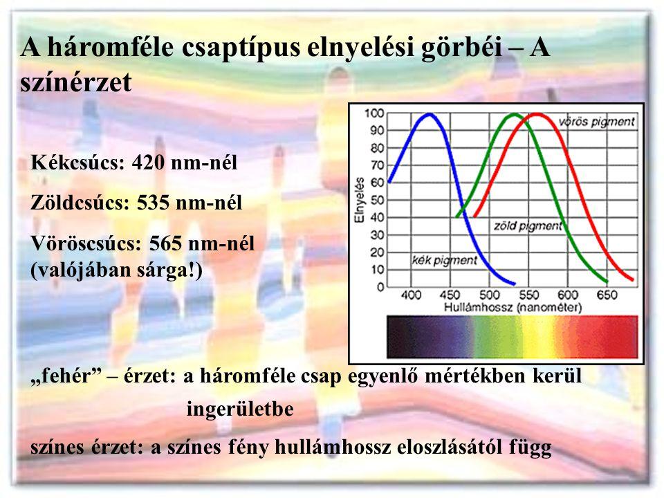 A háromféle csaptípus elnyelési görbéi – A színérzet