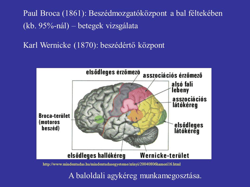 Karl Wernicke (1870): beszédértő központ