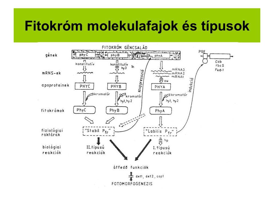 Fitokróm molekulafajok és típusok