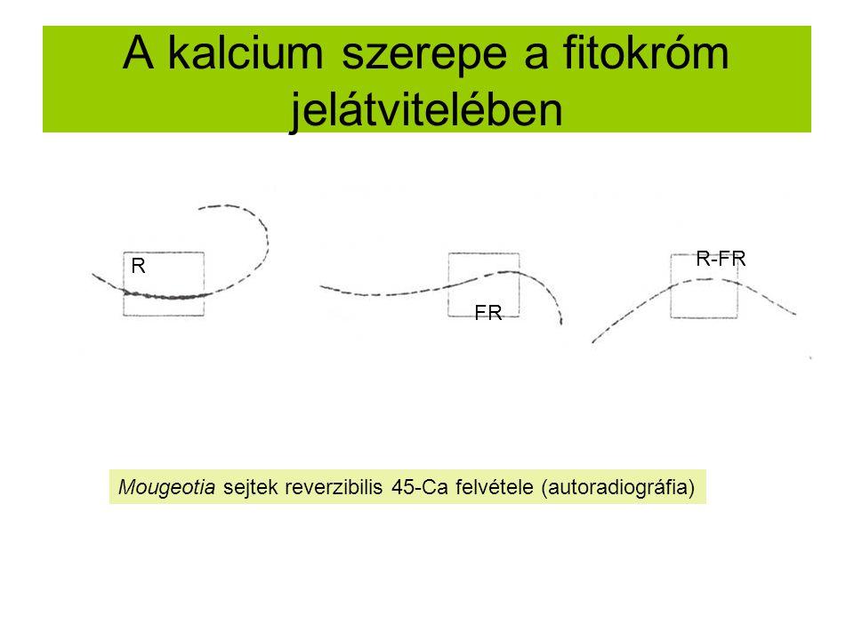 A kalcium szerepe a fitokróm jelátvitelében