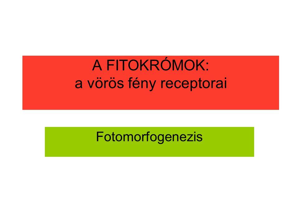 A FITOKRÓMOK: a vörös fény receptorai