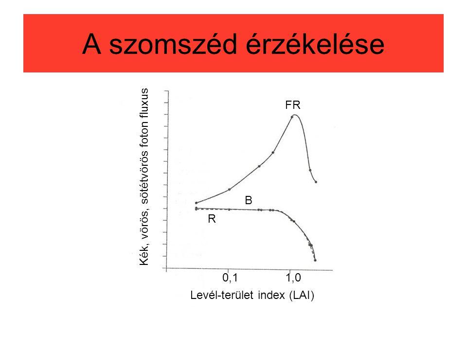 A szomszéd érzékelése FR Kék, vörös, sötétvörös foton fluxus B R 0,1