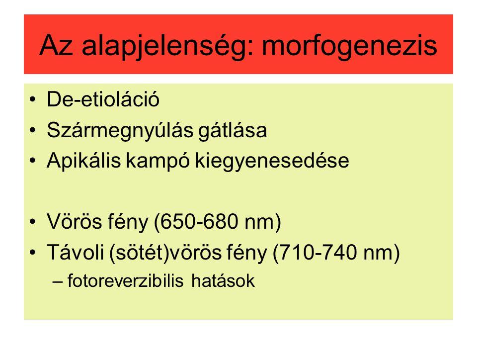 Az alapjelenség: morfogenezis