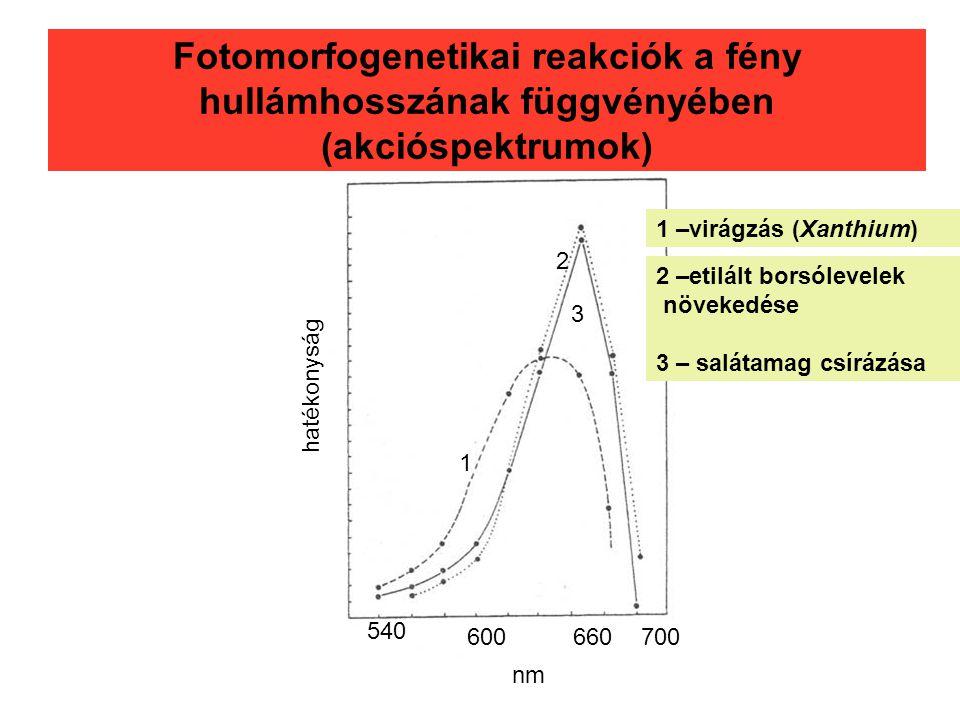 Fotomorfogenetikai reakciók a fény hullámhosszának függvényében (akcióspektrumok)