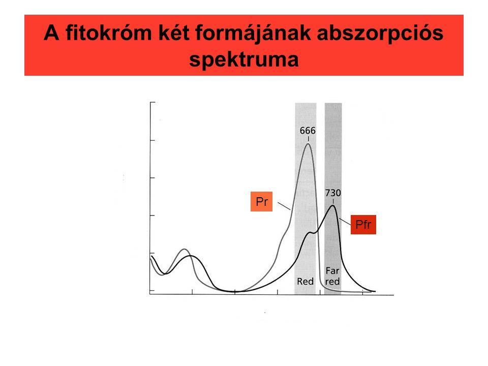A fitokróm két formájának abszorpciós spektruma