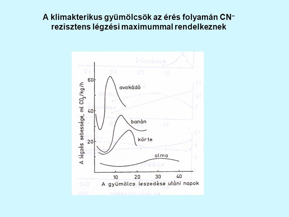 A klimakterikus gyümölcsök az érés folyamán CN– rezisztens légzési maximummal rendelkeznek