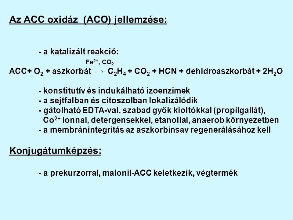 Az ACC oxidáz (ACO) jellemzése: