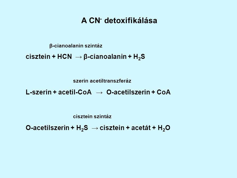 A CN- detoxifikálása cisztein + HCN → β-cianoalanin + H2S