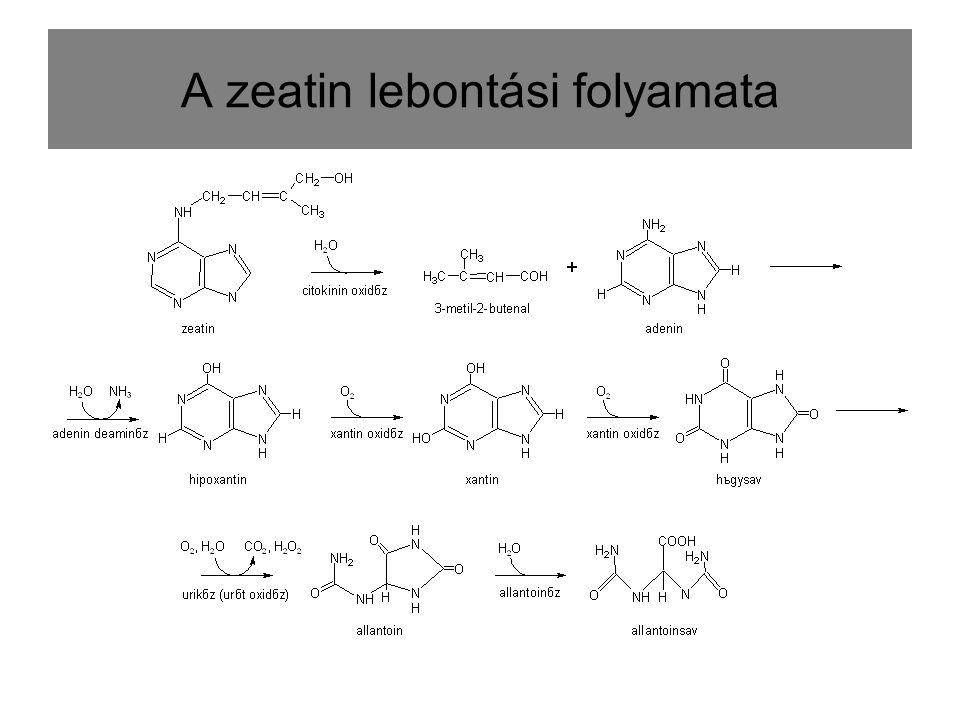 A zeatin lebontási folyamata