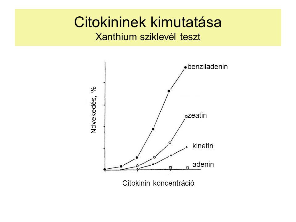 Citokininek kimutatása Xanthium sziklevél teszt