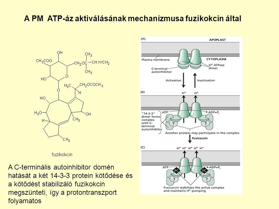 A PM ATP-áz aktiválásának mechanizmusa fuzikokcin által