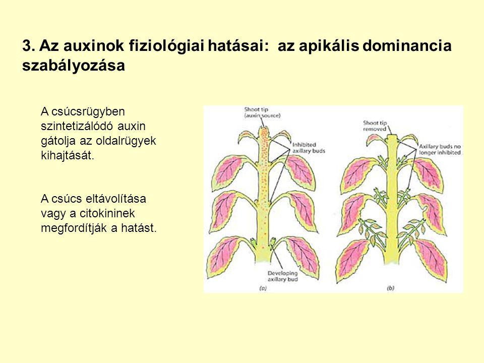 3. Az auxinok fiziológiai hatásai: az apikális dominancia szabályozása