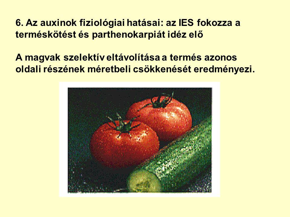 6. Az auxinok fiziológiai hatásai: az IES fokozza a terméskötést és parthenokarpiát idéz elő