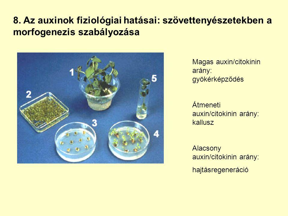 8. Az auxinok fiziológiai hatásai: szövettenyészetekben a morfogenezis szabályozása