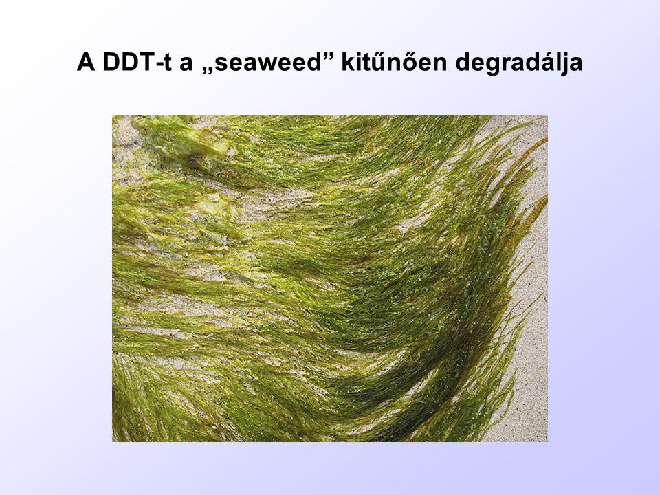 """A DDT-t a """"seaweed kitűnően degradálja"""