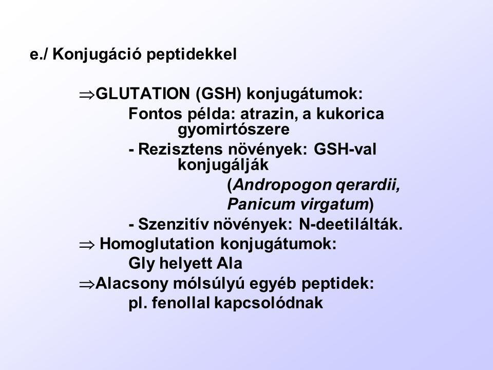 e./ Konjugáció peptidekkel