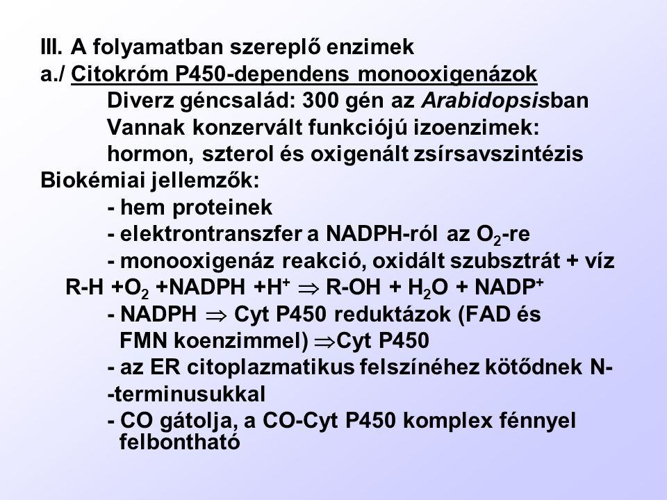 III. A folyamatban szereplő enzimek