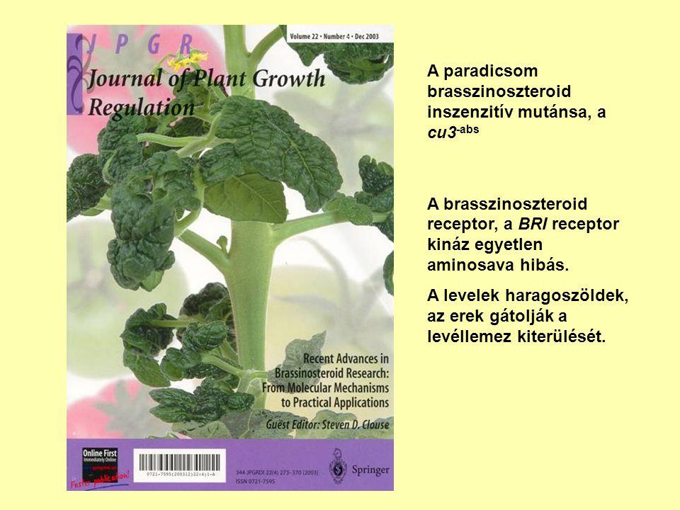 A paradicsom brasszinoszteroid inszenzitív mutánsa, a cu3-abs