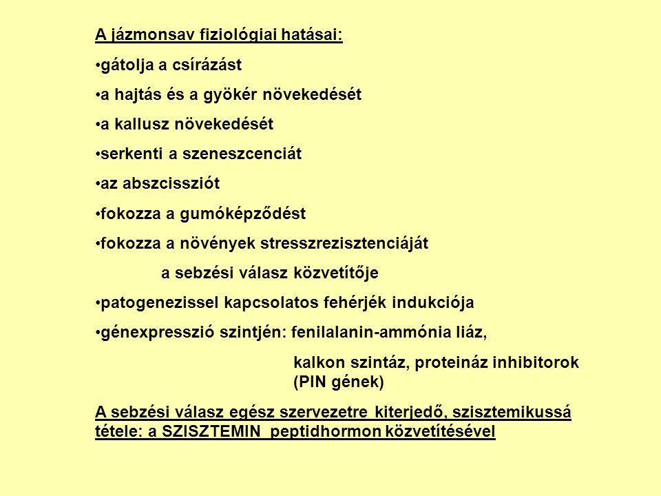 A jázmonsav fiziológiai hatásai: