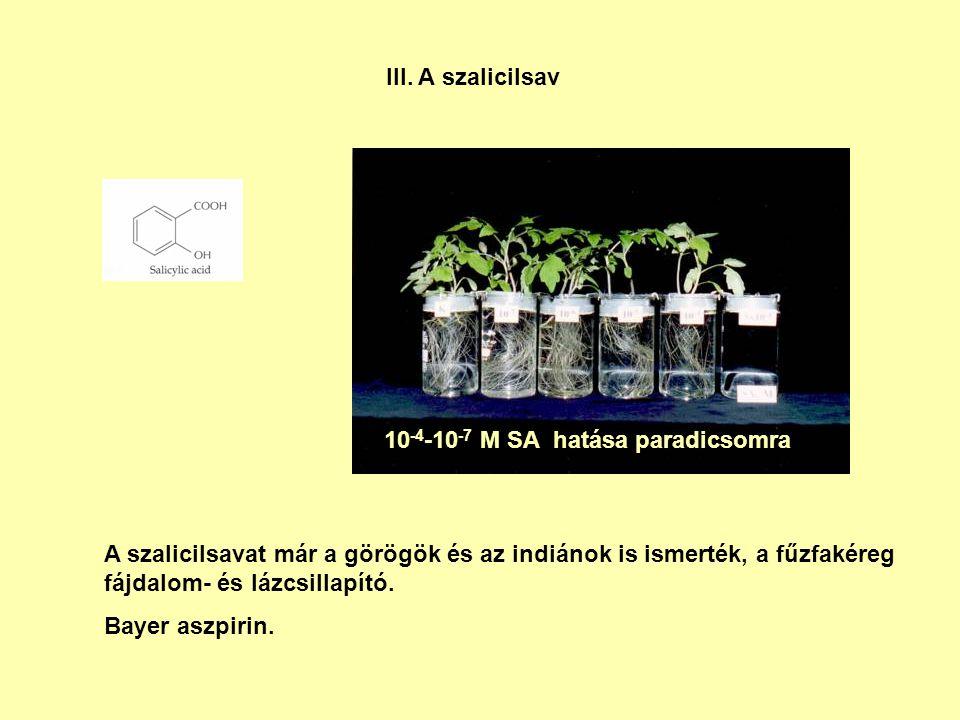 III. A szalicilsav 10-4-10-7 M SA hatása paradicsomra.