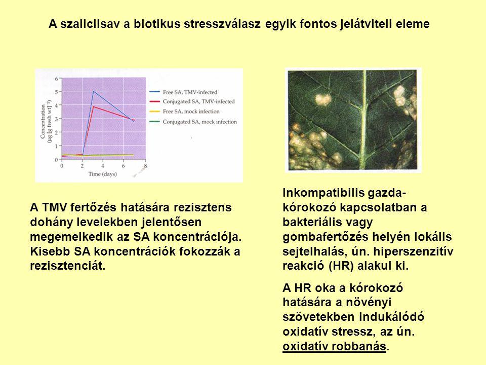 A szalicilsav a biotikus stresszválasz egyik fontos jelátviteli eleme