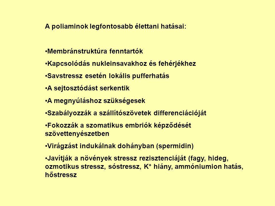 A poliaminok legfontosabb élettani hatásai: