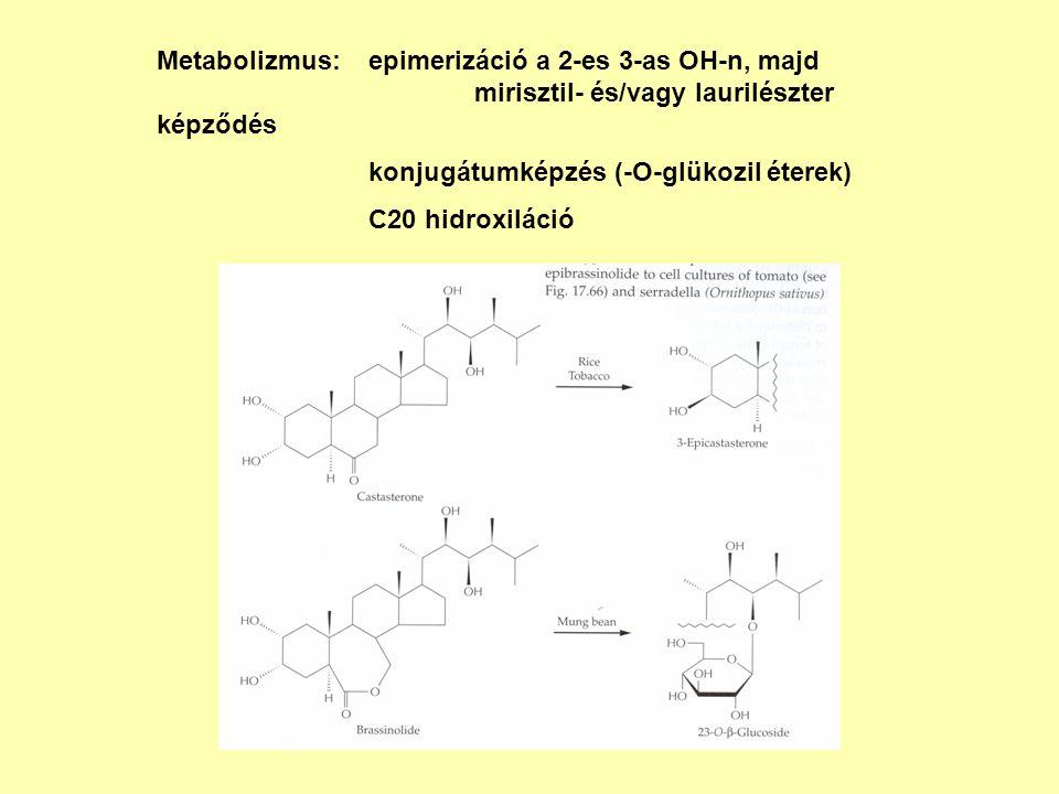 Metabolizmus:. epimerizáció a 2-es 3-as OH-n, majd